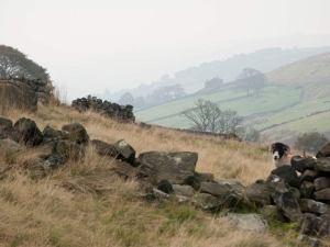 Ashe Barker 2 - Bronte Moors 10-3-13